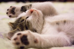 mačka-spava-maca