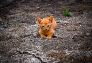 mačke-mače