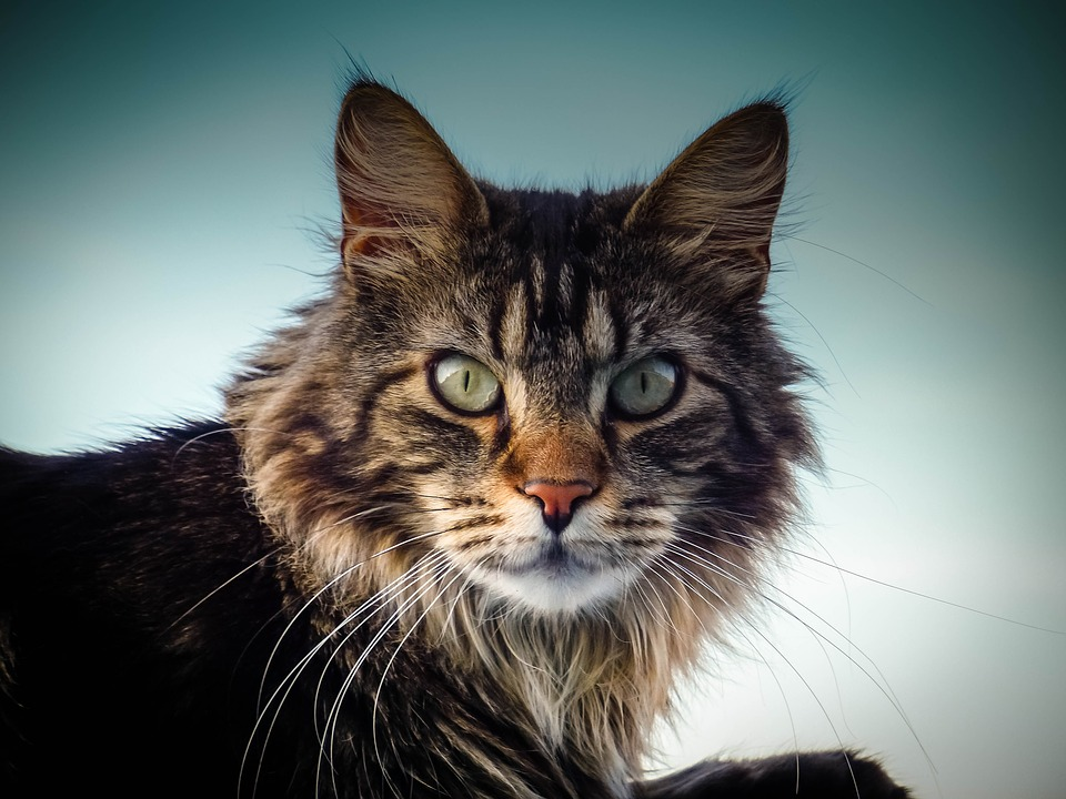 Velika maca maca tumblr