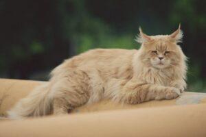 mejn-kun-mačka2