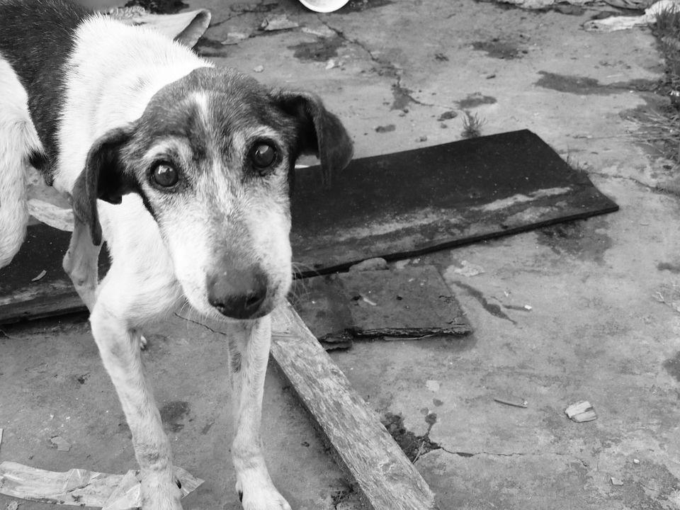 napušteni-pas-pomoć