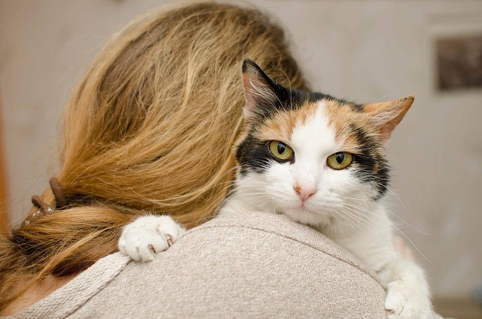 mačka-zagrljaj