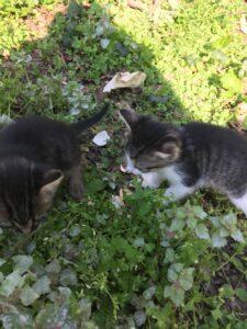 pronađeni-mačići-mače-mačka-banovo-brdo-park