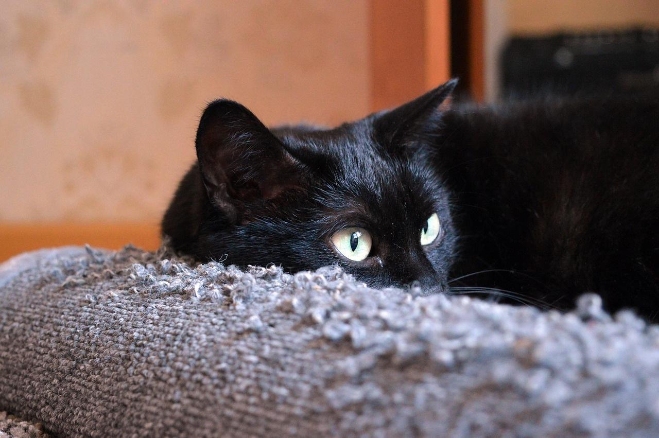 crna maca f