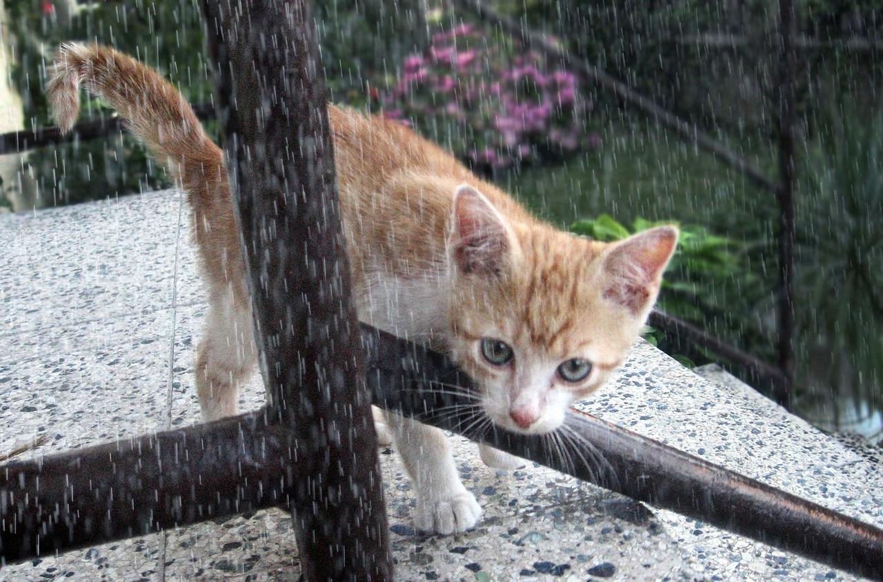 mačka-kiša