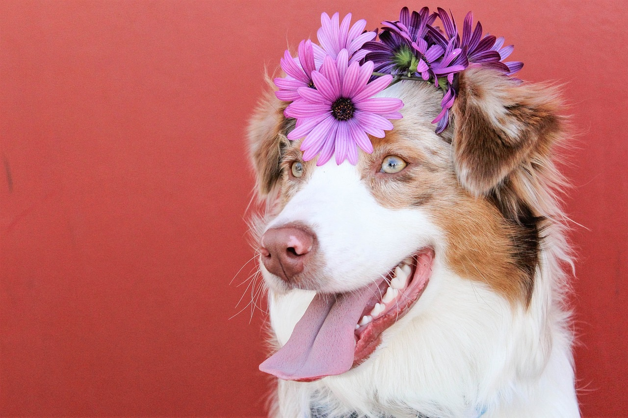 pas-izložba-cveće