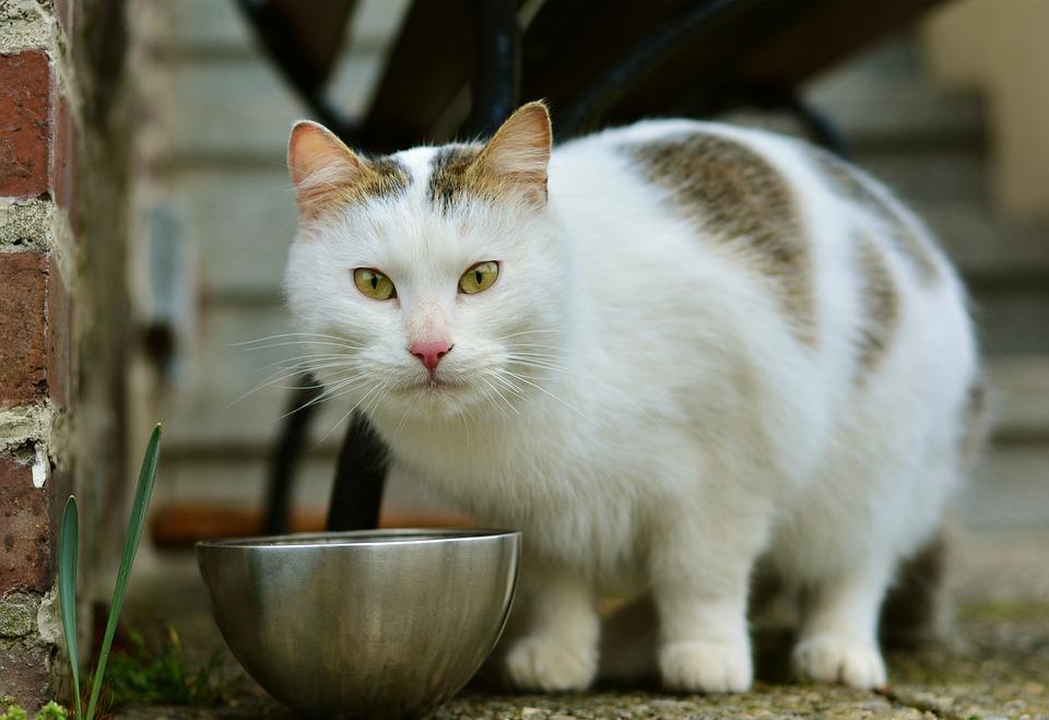 mačka-hrana-posuda