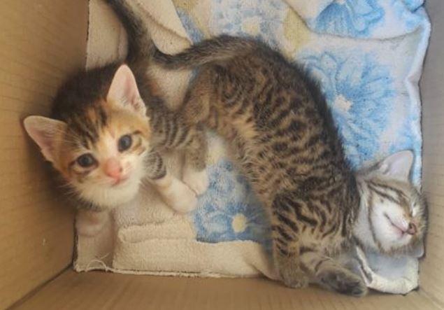 maca-mače-udomljavanje-izdvojena