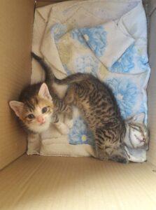 maca-mače-udomljavanje2