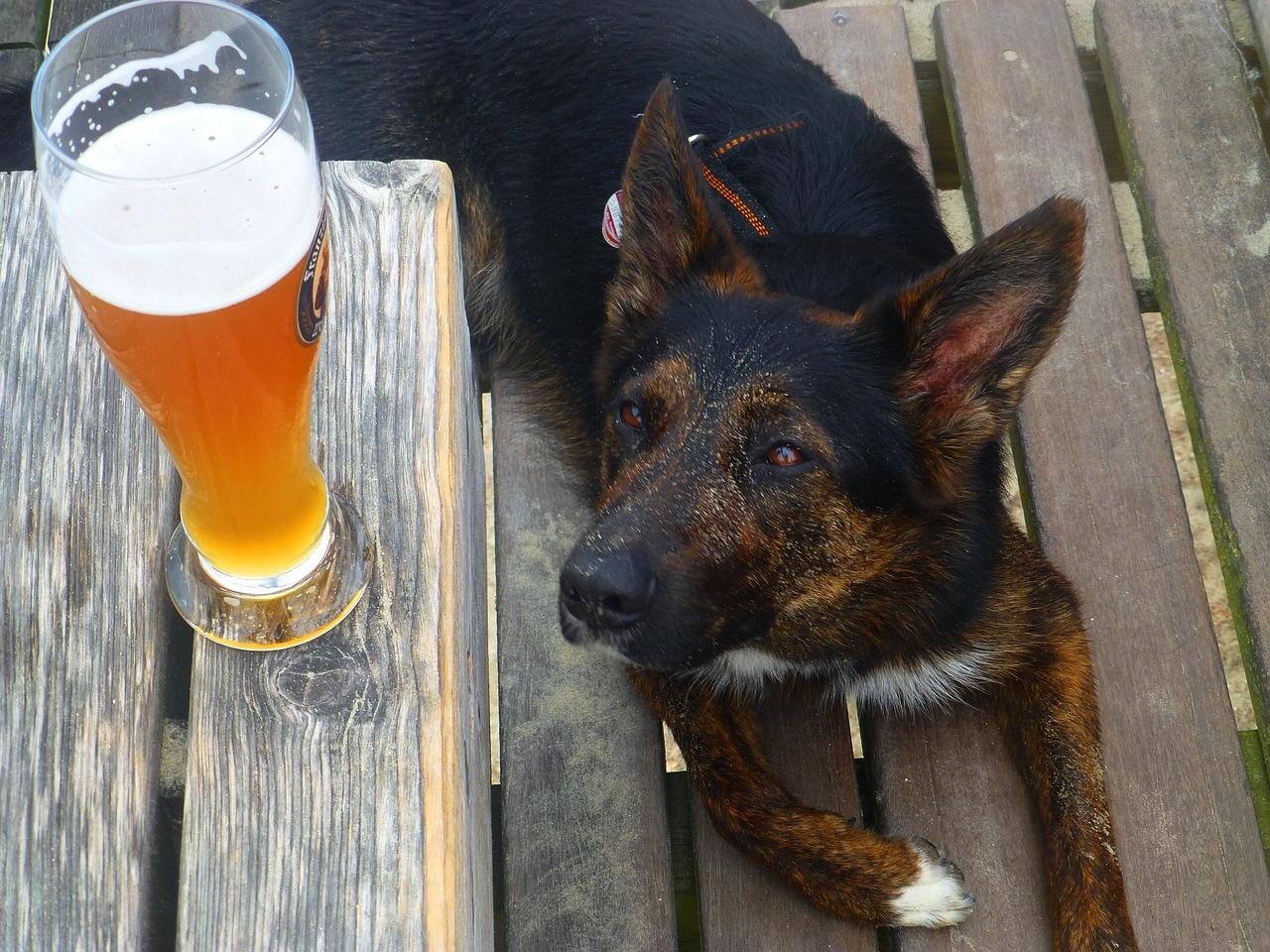 pas-pivo