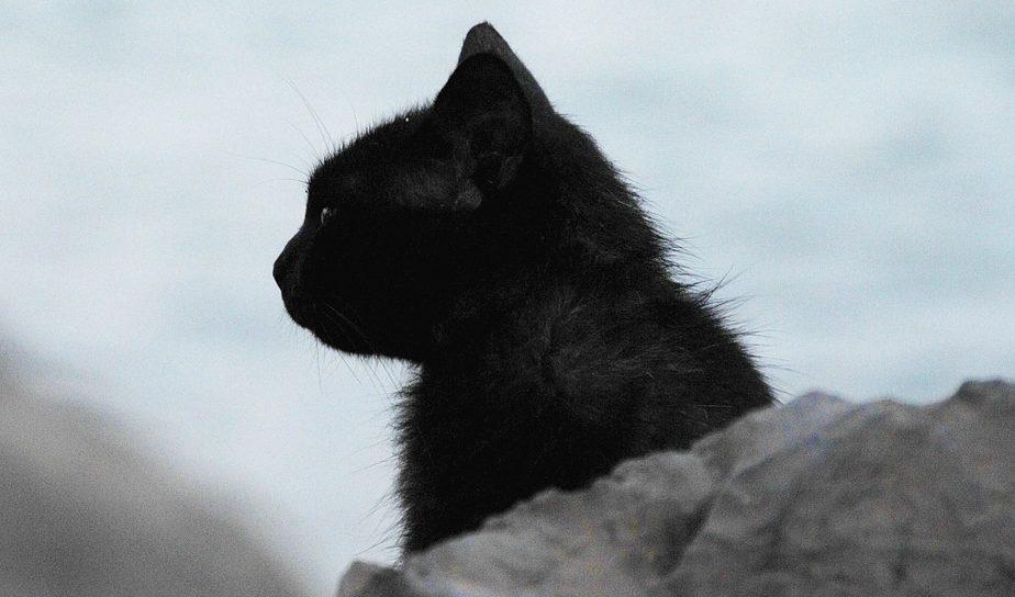 crna-mačka-profil
