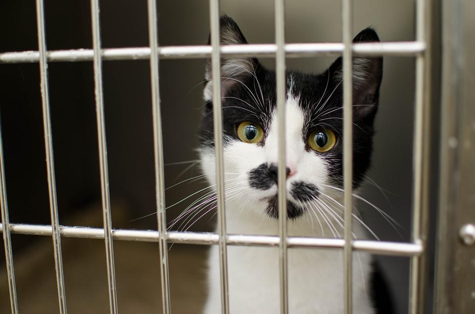 mačka-kavez-bolesti-zdravlje-ljubimaca