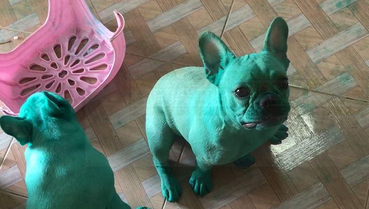 zeleni-buldozi-psi-boja