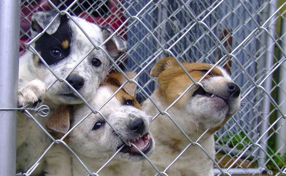 štenci-kučići-udomljavanje-pas-udomi
