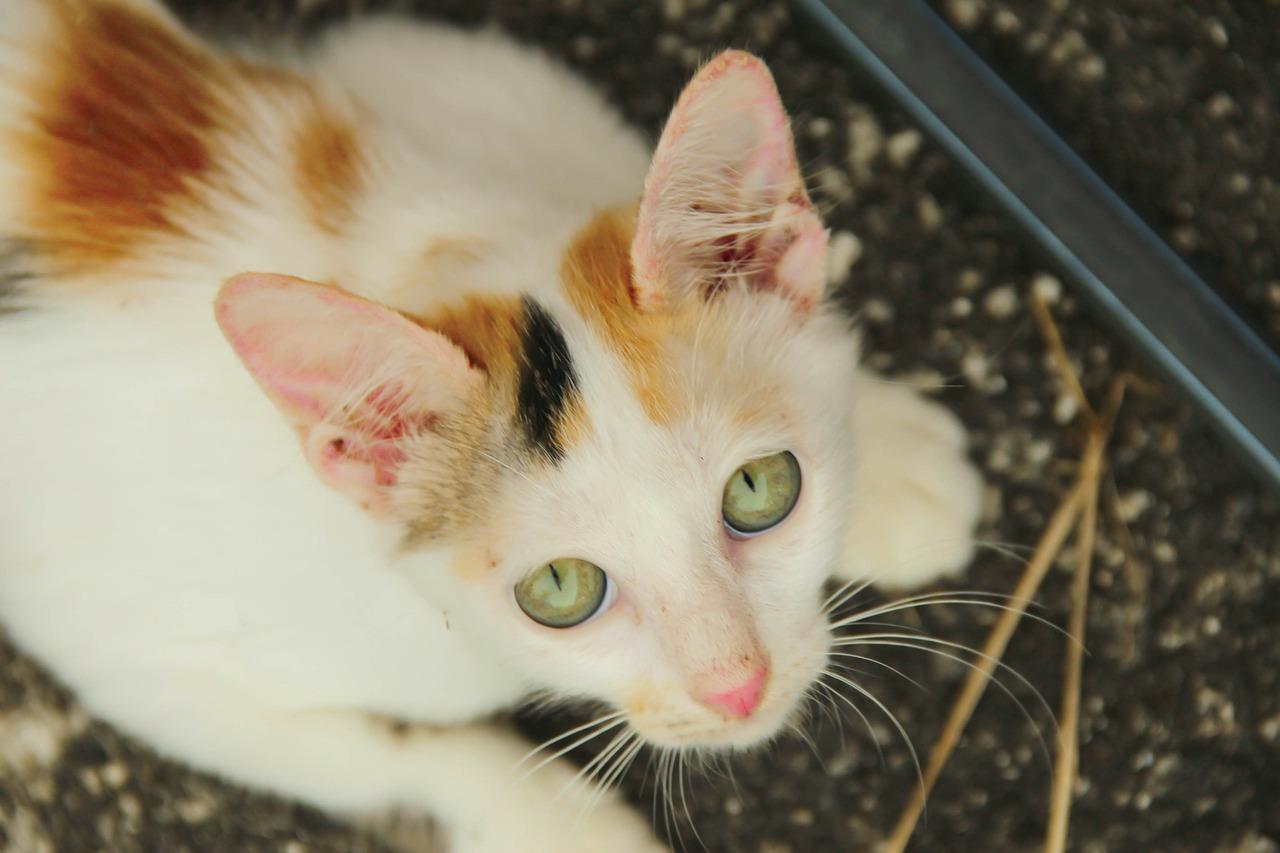 mačka-veterinar