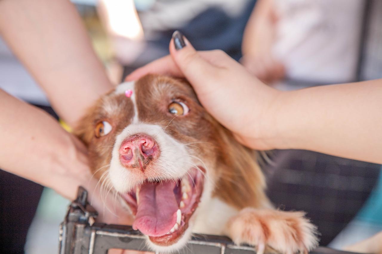 spasavanje-pas