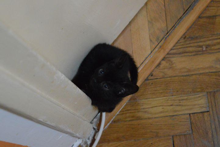 crna-maca-traži-dom