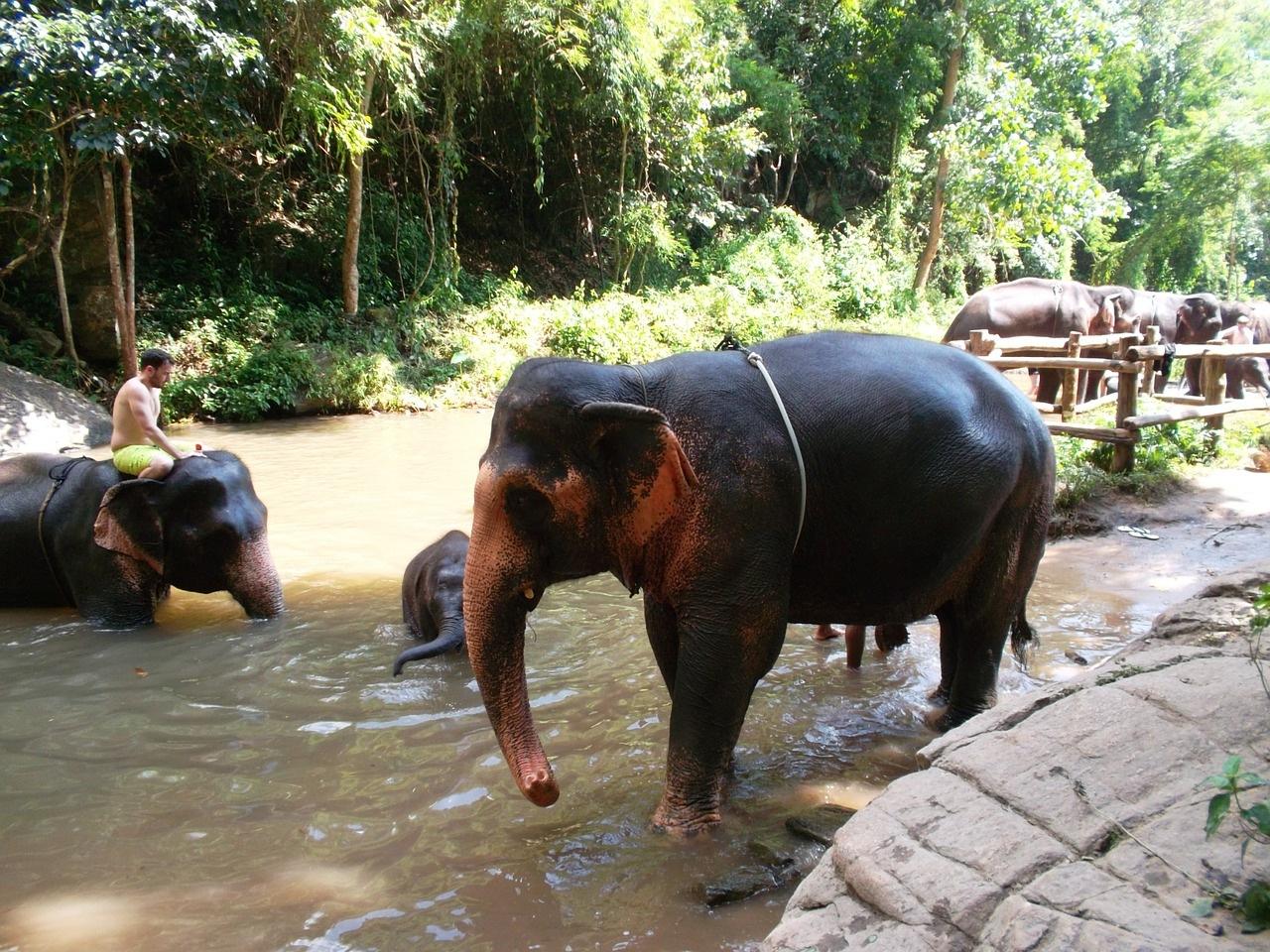 slonovi-tajland