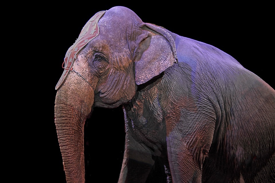 slon-cirkus