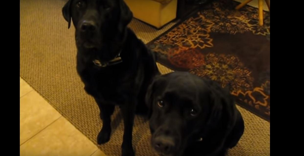psi-kriv-brat-sestra