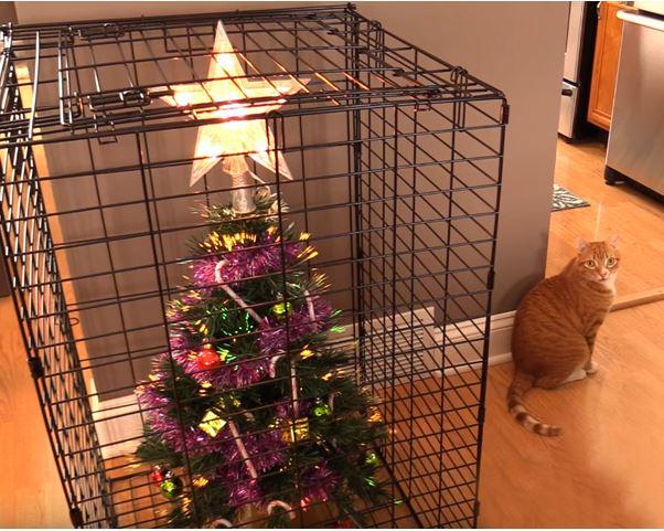 mačka-nova-godina-jelka