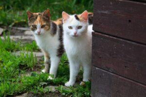 mačka-dve-mačke