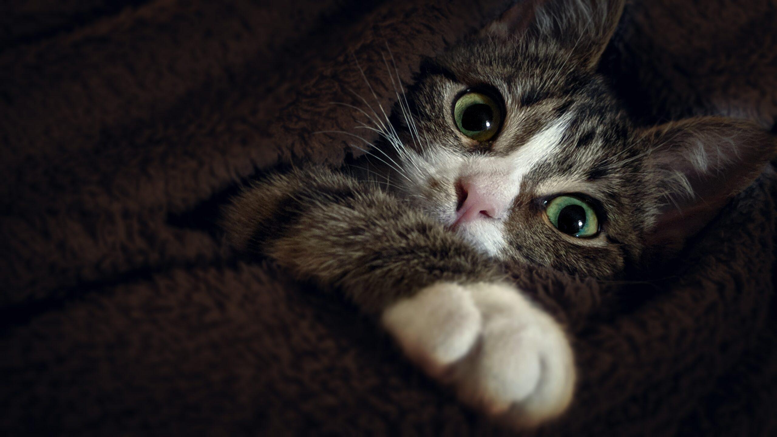 mačka-maca