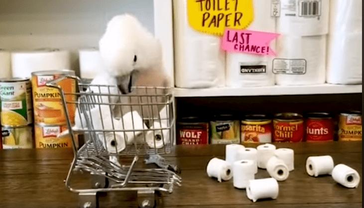 papagaj-toalet-papir