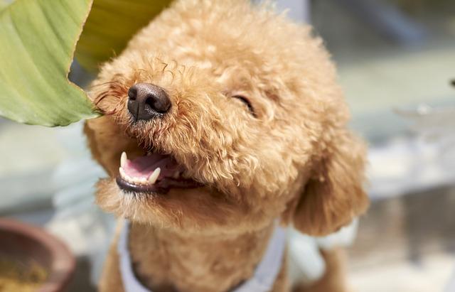 pas-osmeh-kuče-štene