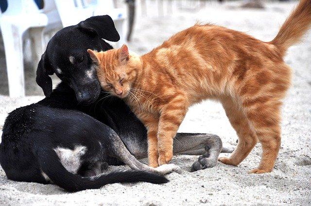 pas-mačka