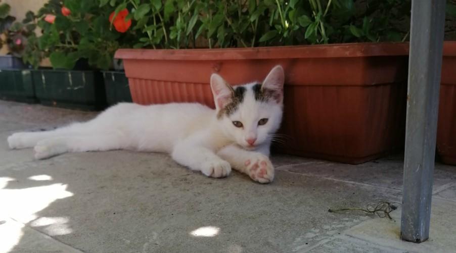 mačka-poklon