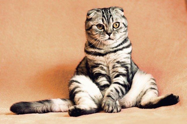 mačka-sedi