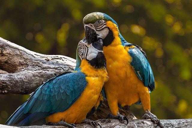 papagaji-stvari-otrovne-za-papagaje-moj-ljubimac