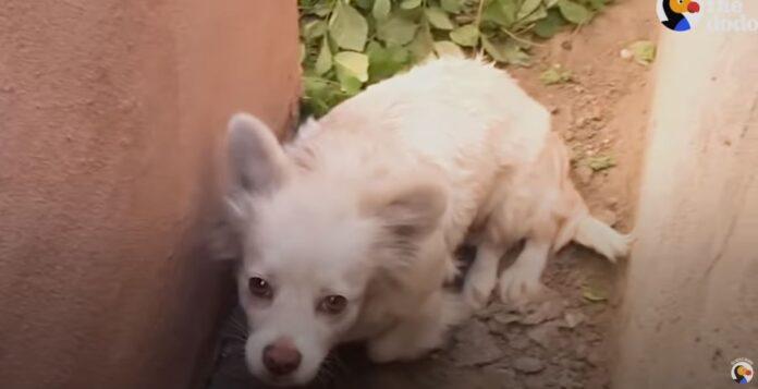 ostavljeno-kuče-pas