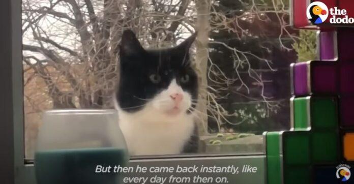 mačka-prozor