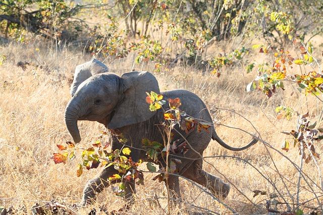beba-slon-slonče