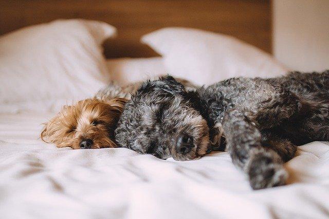 psi-spavanje-krevet