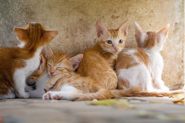 mačka-mačići-mače-prede-moj-ljubimac-info