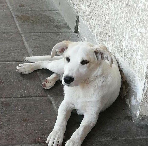 štene-staro-četiri-meseca-traži-dom-moj-ljubimac