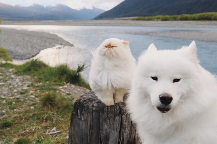 pas-mačka-drugari