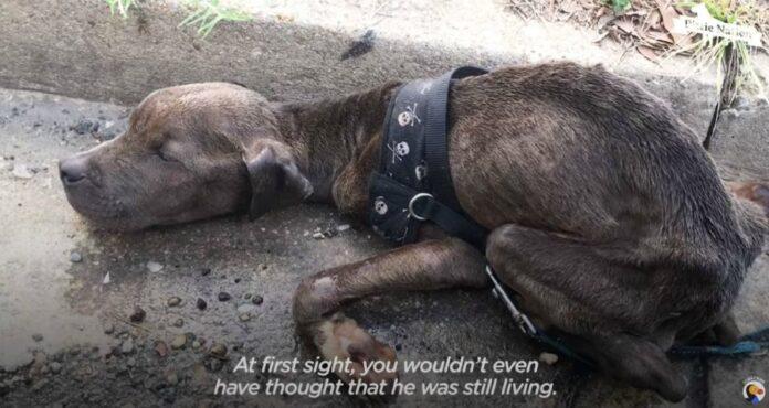 pas-spasavanje