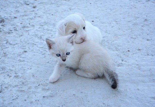 pas-mačka-štene-mače