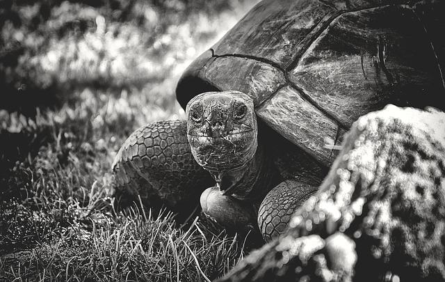kornjača-ljubimac