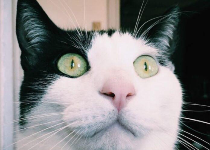 mačka-oči-mače-maca
