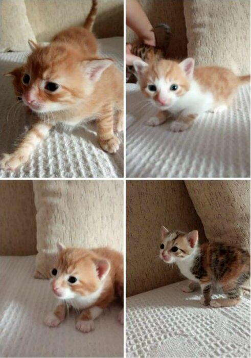 mačke-udomljavanje