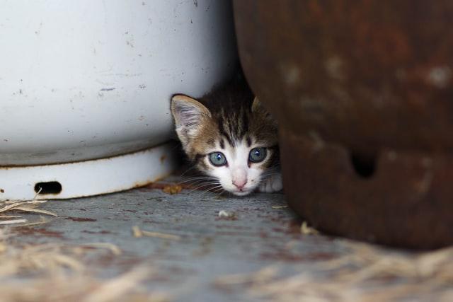 mačka-mače