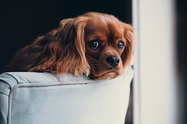 pas-kuče-moj-ljubimac (1)