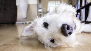 pas-kuče-moj-ljubimac (2)