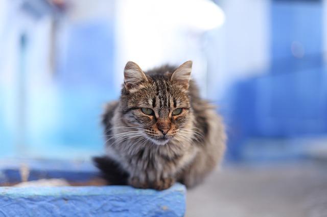 mačka-kuća