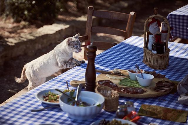 hrana-mačka-sto